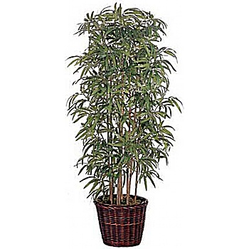 5ft Japanese Bamboo
