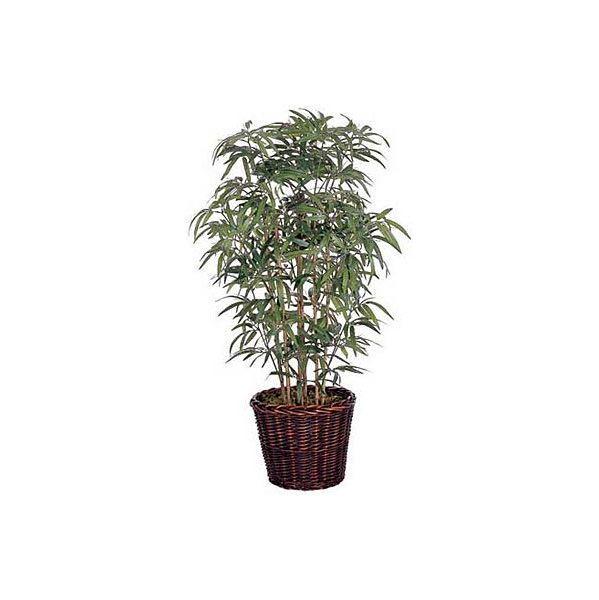 4ft Japanese Bamboo with Natural Stems