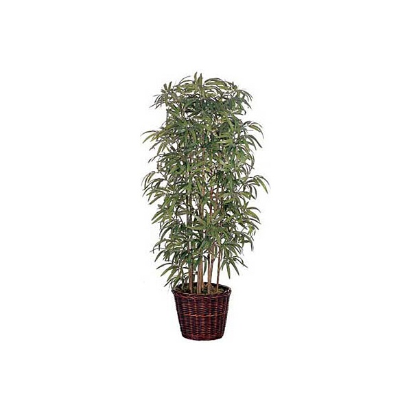 5ft Japanese Bamboo with Natural Stems