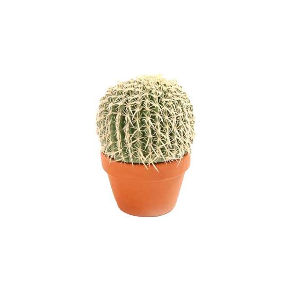 Medium Cacti
