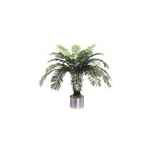 4ft Cycas Palm