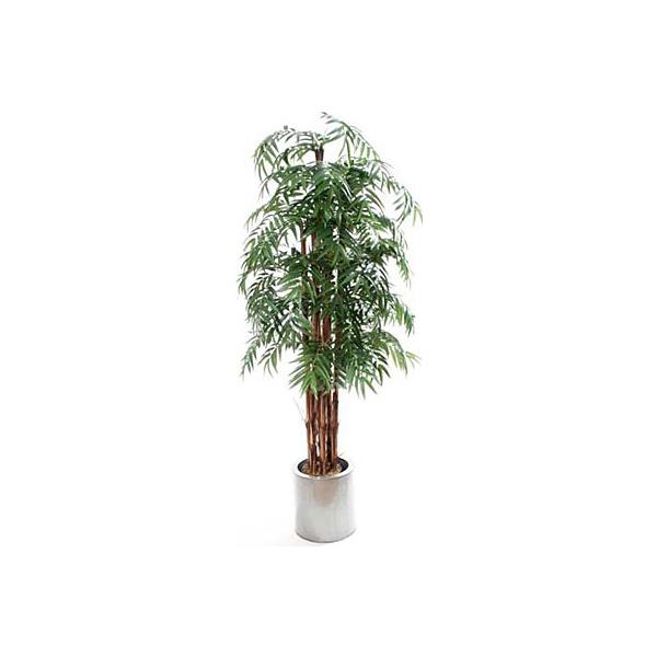 7ft Phoenix Palm
