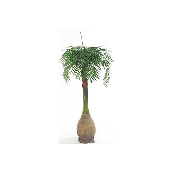 7.5ft Phoenix Palm