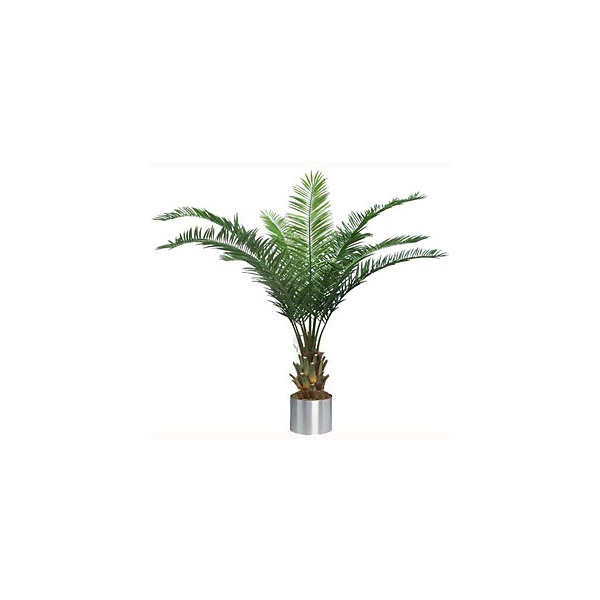 7.5ft Date Palm