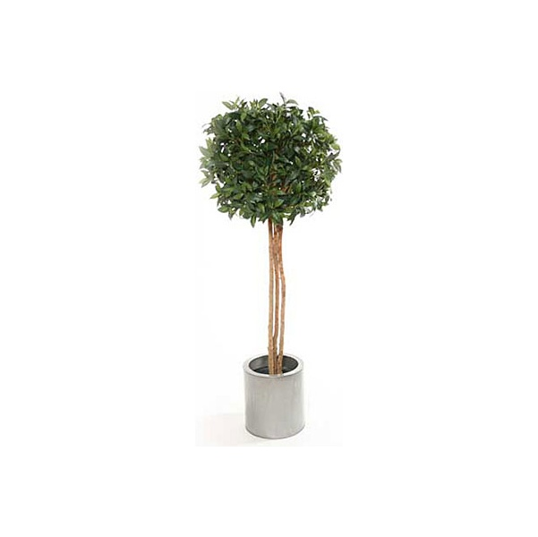 4ft Single Ball Bay Laurel Topiary with Natural Stem