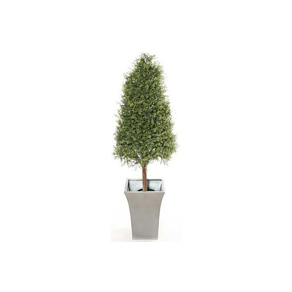 4ft Tea Tree Topiary Pyramid with Natural Stem