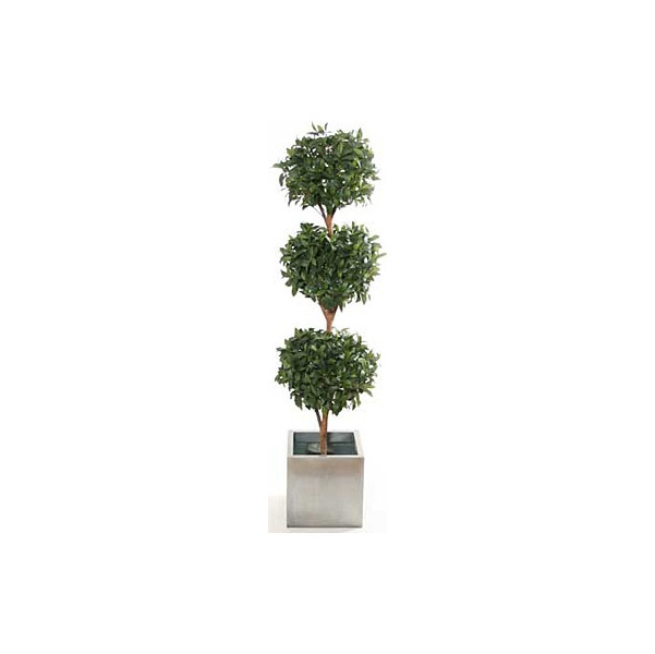 6ft Triple Bay Ball Topiary with Natural Stem