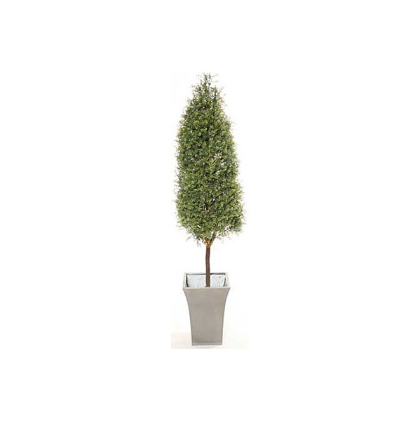 5ft Tea Tree Topiary Pyramid with Natural Stem