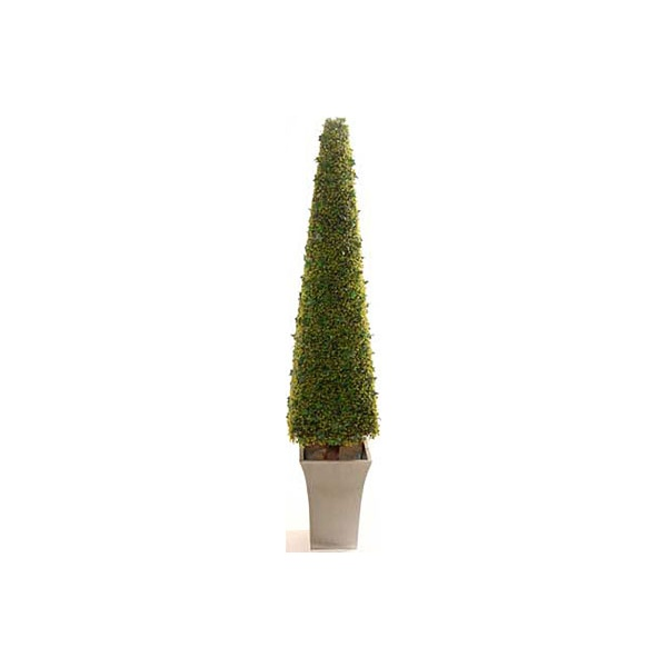 6ft Pyramidal Boxwood Tower