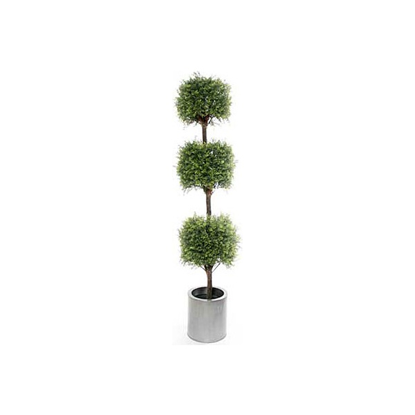 6ft Tea Tree Topiary with Natural Stem