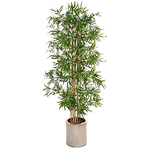 6ft Japanese Bamboo
